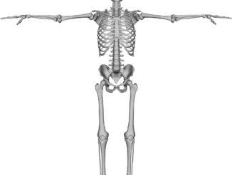 human-bones
