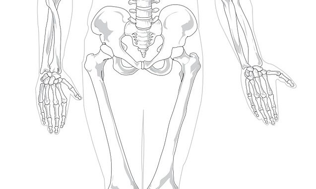 Find Out Which The 6 Longest Bones In The Body Are And Which Is The